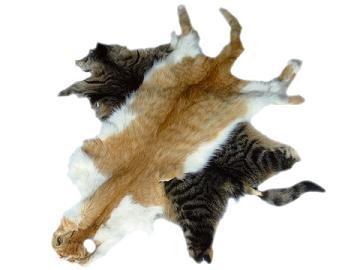 ninfosman.com fourrure de chat